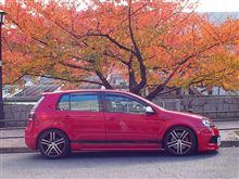 GTI under the foliage