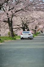 RC と 桜