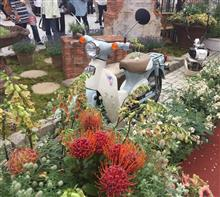Internationarl Rosse & Gardeninng show 2017