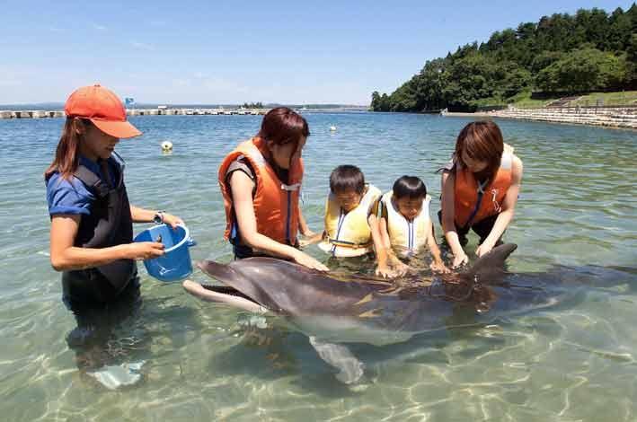 「能登島 イルカ」の画像検索結果