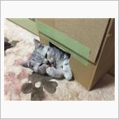 猫好き男。さんのプロフィール画像
