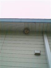 スズメバチの巣が・・・・