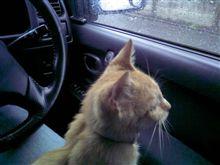 雨のドライブ…