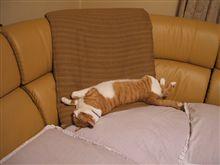 ボクはこのお布団で眠る