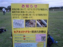 東海広場 OFF(セアカゴケクモの巣)