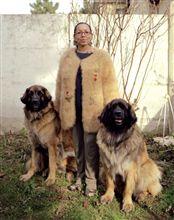 愛犬の被毛でコートを!!