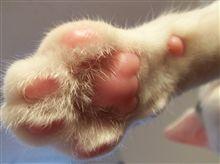 肉球猫パンチ