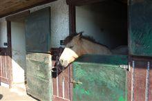 今シーズン最後のツーリングは馬がいっぱい