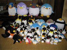 ペンギンコロニーです。