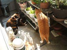 立ち食い猫草