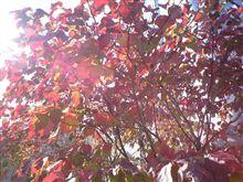 秋ですね(*^-^*)