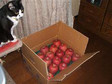 今年のリンゴ