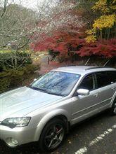 季節外れの桜見物