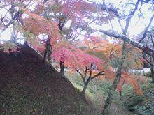 紅葉-長篠城