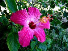 [リベンジの旅]今年の締めくくりに沖縄へ