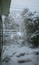 大晦日の朝…雪です