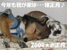 ◆寝正月からイチャイチャ(*´ -`)(´- `*)