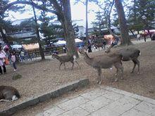 奈良へ日帰り