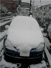 ゆ、雪ぃー
