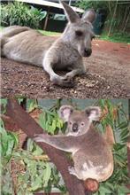 オーストラリアと言えば
