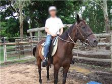 馬はFR?
