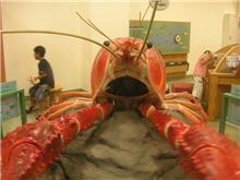 ローコストで行きそこねた…[10] 琵琶湖博物館