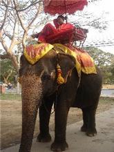 象さんに乗ったし。。。