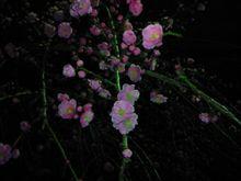 春か~(・∀・)