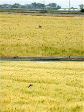 小鳥撮影  №2