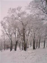 ひさびさの雪の感触