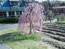 冬から春へ……