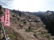 賀名生梅林2009