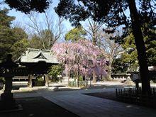 綺麗な境内の枝垂桜
