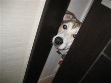 マーリー世界一おバカな犬が教えてくれたこと