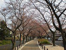 桜は咲いたか?