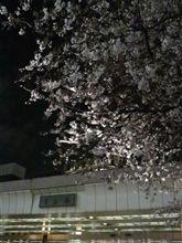 しばしの夜桜見物