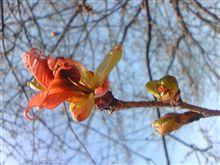 桜が咲きました?