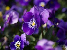 ケバめの花