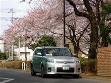 桜との初コラボ!
