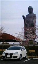 桜と大仏と我がクルマ