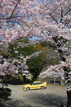 桜と宮号2009
