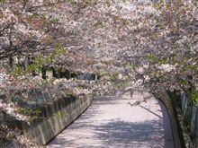 桜散ると、、、