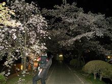 夜桜と昼間の桜