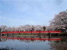 岩槻城址公園の桜まつり