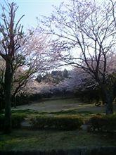 桜~その2