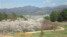 山の上の桜♪
