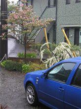 春雨の庭と青GTI