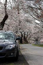 雪が降った後の、東公園 桜(レガシィ)
