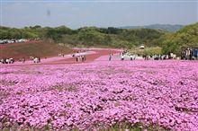 芝桜ドライブ^^