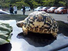 只今グリーンピア三木にてオフ会ちう。  …写真は無論オフ会風景デスヨ?